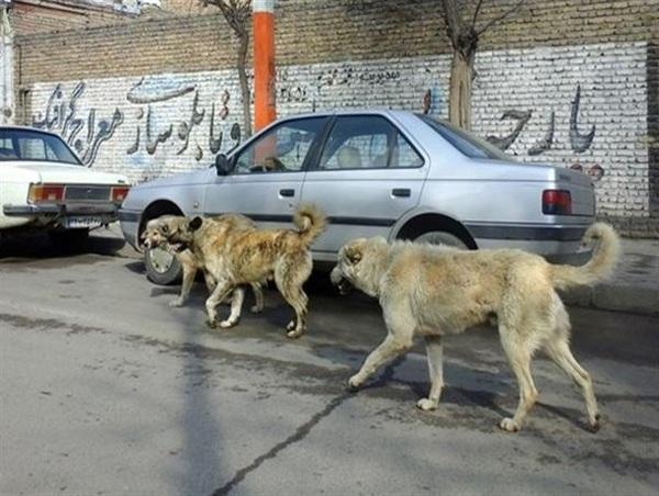 میزبانی آشخانه از سگ های روستاهای همجوار/ مرگ آرام در انتظار سگ های ولگرد